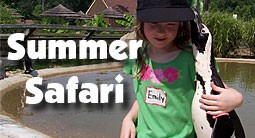 summer-safari